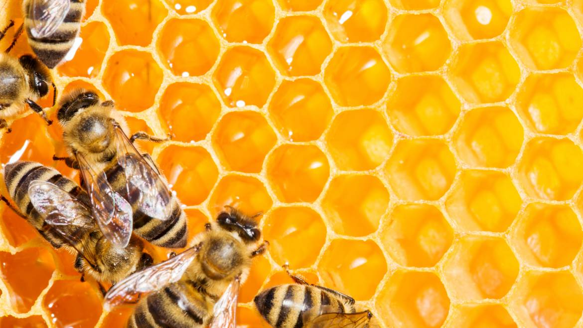 The Busy, Buzzy Work That Bees Undertake to Create Honey